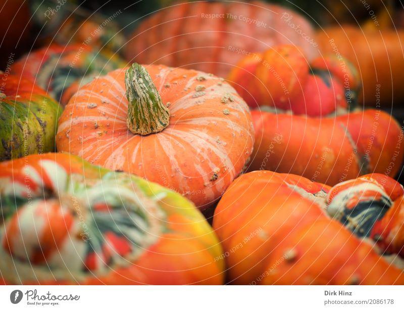 Kürbisernte Natur Landschaft Pflanze Herbst Nutzpflanze Feld rund orange Ernte Kürbiszeit Kürbisgewächse Lebensmittel Landwirtschaft Agrarprodukt herbstlich