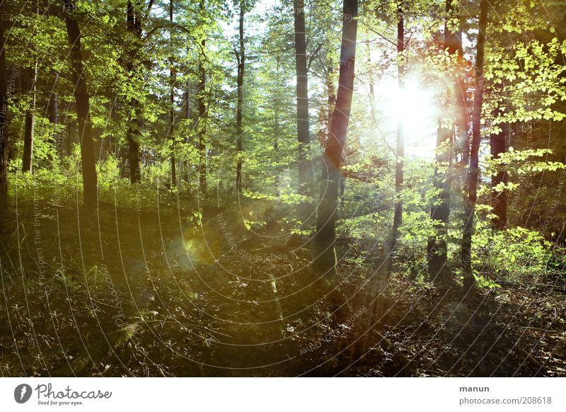 Lichtung Natur Baum Landschaft Wald Umwelt Wärme Holz natürlich Klima Ausflug Baumstamm Umweltschutz Waldboden Waldlichtung Waldrand Laubwald
