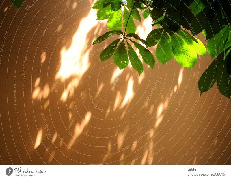 Lichtspielhaus Pflanze Baum Grünpflanze Wildpflanze Blätterdach Mauer Wand Fassade natürlich Wärme grün Natur Wachstum Farbfoto Außenaufnahme Menschenleer