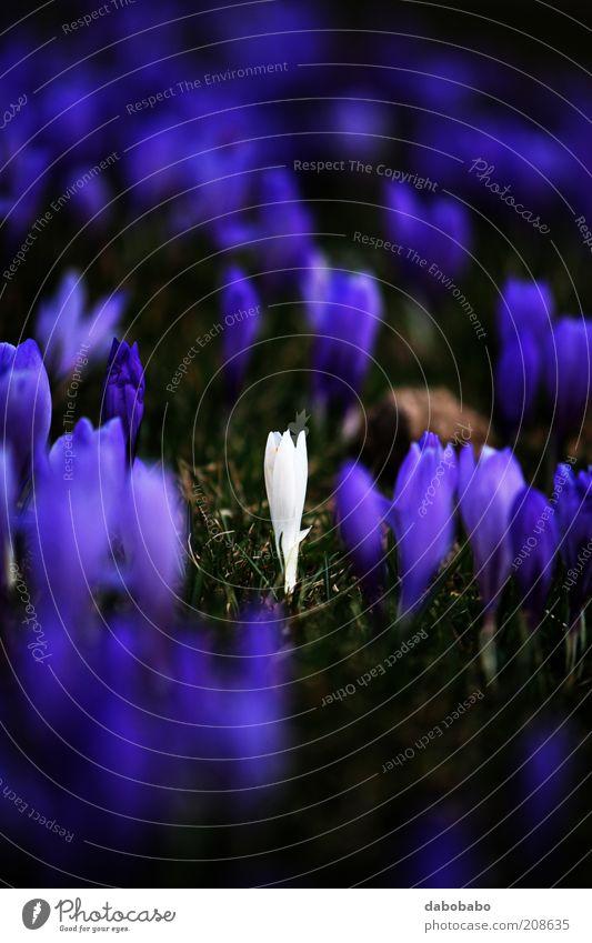 Natur schön Blume Pflanze ruhig Einsamkeit Farbe Wiese Blüte Berge u. Gebirge Freiheit Zufriedenheit frei Perspektive Wandel & Veränderung violett