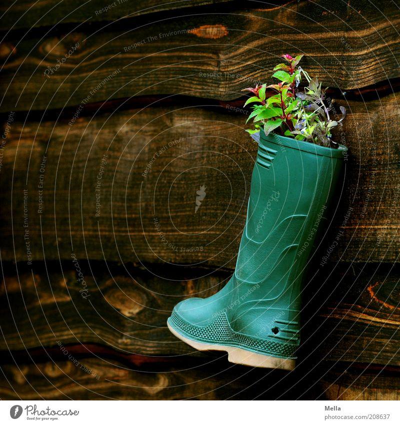 Dauerhafte Nutzungsänderung Pflanze Blume Mauer Wand Fassade Gummistiefel Dekoration & Verzierung Kitsch Krimskrams Blumentopf Blumenkasten Holz hängen Wachstum