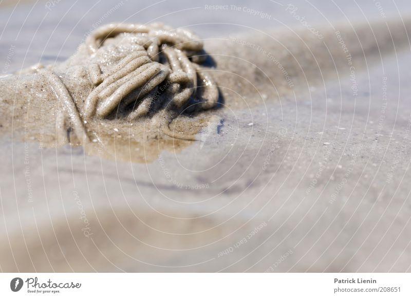 Wurm im Watt Natur Wasser Meer Sommer Strand Tier Sand Landschaft Küste Umwelt Insel Klima Kot Wildtier Urelemente