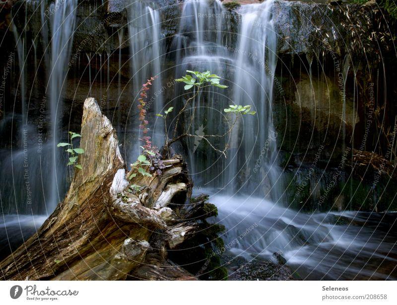 kleine Oase Ferien & Urlaub & Reisen Tourismus Ausflug Umwelt Natur Landschaft Wasser Klima Pflanze Felsen Wasserfall nass natürlich Erholung rein fließen