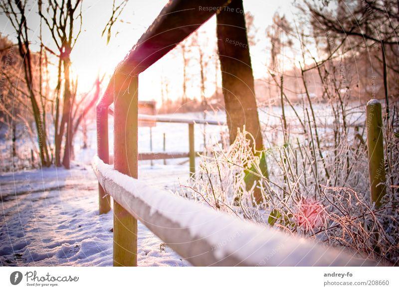 Sonnenuntergang im Winter Natur Sonnenaufgang Sonnenlicht Schönes Wetter Eis Frost Schnee Baum Garten Wege & Pfade Holz weiß Zaun Wintertag kalt