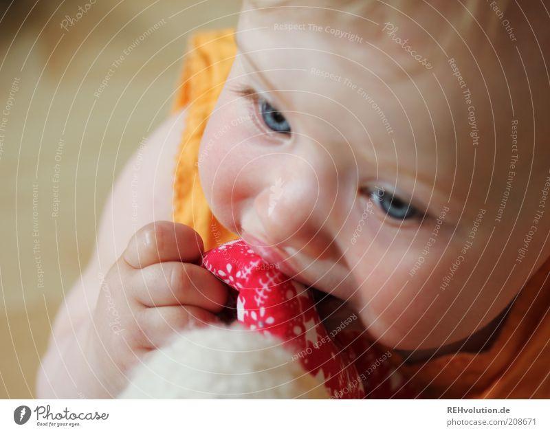 """""""Schmeckt gar nicht mal so gut."""" Kind Baby 1 Mensch 0-12 Monate Glück klein Neugier entdecken Erfahrung Freude Spielen blond Finger Versuch Spielzeug rot beißen"""