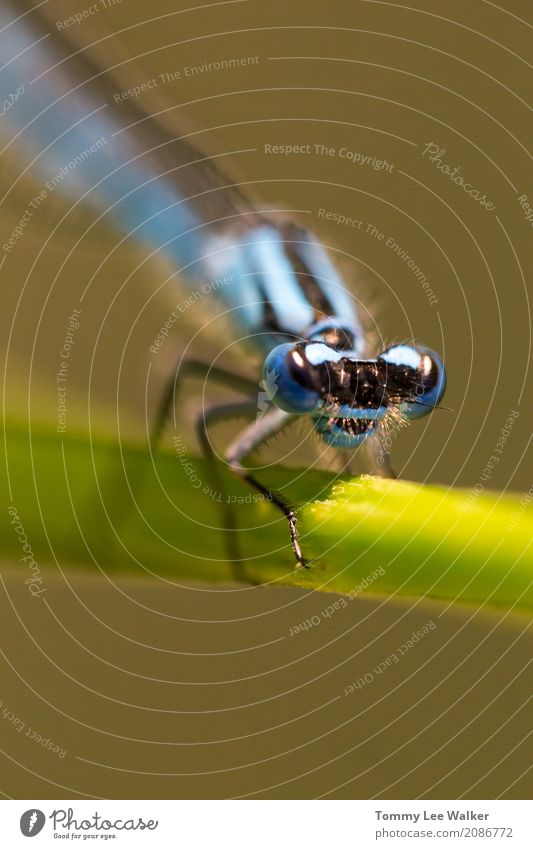 Natur Mann Pflanze blau Sommer Farbe grün Blatt Erwachsene Gras wild Angst groß hoch Flügel Lebewesen
