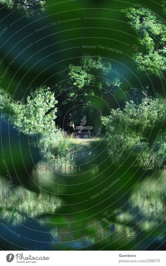 Bankgeheimnis Natur Baum grün Pflanze Sommer ruhig Blatt Einsamkeit Tier Wald Erholung Gras Holz Landschaft braun Pause