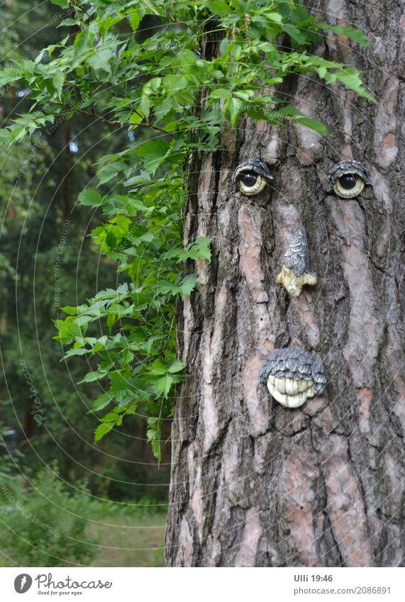 Alt wie ein Baum............ Mensch Mann alt Sommer grün Einsamkeit Wald Gesicht Senior Holz braun Zufriedenheit maskulin Dekoration & Verzierung 60 und älter