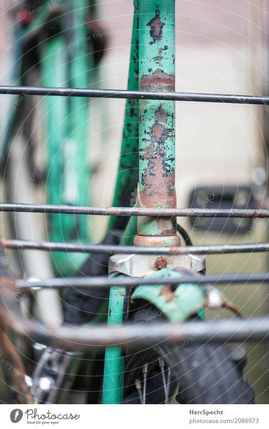 Alter Packesel Fahrzeug Fahrrad alt authentisch trendy trashig grün Alterserscheinung Altersspuren Patina Rost Gepäckträger Gepäckablage Fahrradrahmen