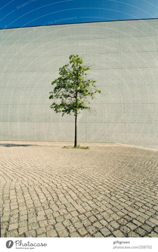 einzelgänger Himmel Baum Stadt Pflanze Einsamkeit Straße Wand grau Mauer Beton Wachstum Kopfsteinpflaster Baumstamm Stadtzentrum einzeln