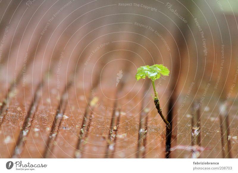 Bäumchen grün Pflanze Blatt braun klein Blühend Grünpflanze