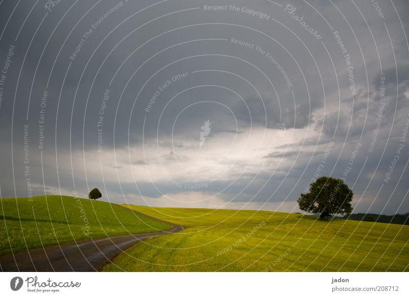 DU wolltest doch unbedingt abschalten! harmonisch Erholung Sommerurlaub Landschaft Pflanze Gewitterwolken Horizont schlechtes Wetter Baum Feld ästhetisch grün
