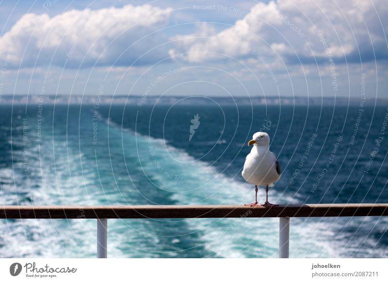 Fahrgemeinschaft Ferien & Urlaub & Reisen blau Wasser weiß Tier Wolken Küste Freiheit Vogel Horizont Wildtier sitzen stehen Schönes Wetter Coolness fahren