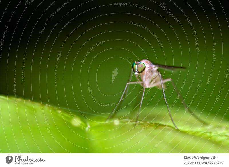 Ich würd gern wissen wie sie heißt Umwelt Natur Tier Frühling Sommer Pflanze Wald Fliege Flügel 1 beobachten sitzen grau grün schwarz Insekt Facettenauge