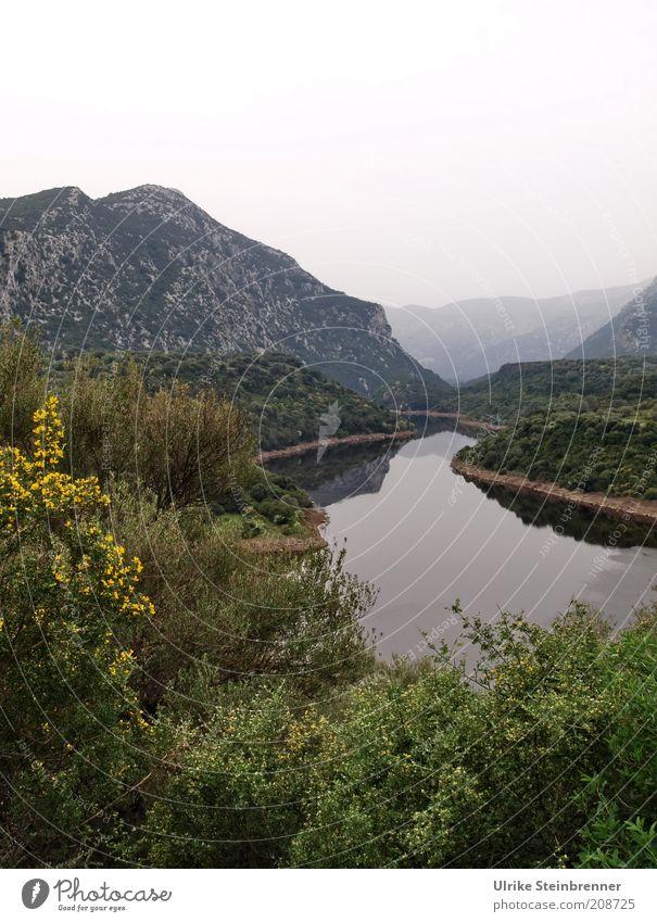 Das Leben ist ein langer ruhiger Fluss Natur Wasser schön Baum grün Berge u. Gebirge Landschaft Nebel Felsen Wachstum Sträucher Frieden Vergänglichkeit Kurve