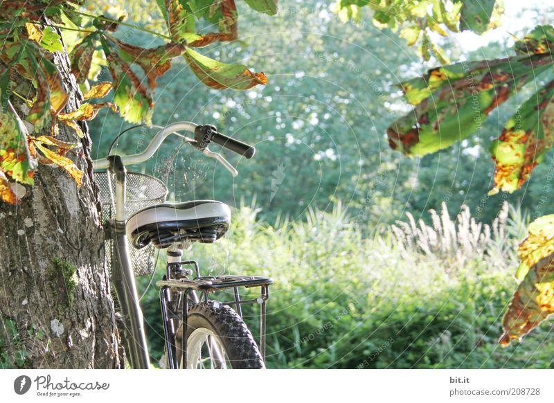 Abgestellt Natur Baum Sommer Ferne Herbst Landschaft Freiheit Gras Glück Stimmung Fahrrad Pause Sträucher Baumstamm Herbstlaub Sommerurlaub