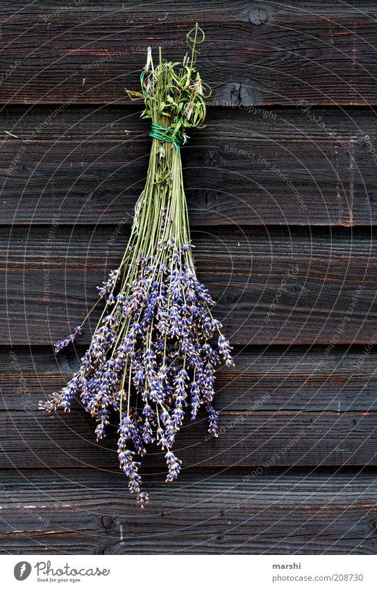 LAVENDEL Natur Frühling Sommer Pflanze Blume Blüte braun violett Lavendel getrocknet Duft Holzstruktur hängend Dekoration & Verzierung Farbfoto Außenaufnahme