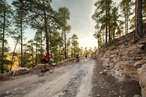 Aufholjagd Mensch Landschaft Wald Straße Lifestyle Wege & Pfade Sport Freizeit & Hobby Schönes Wetter Geschwindigkeit Fahrradfahren Fitness Sportmannschaft