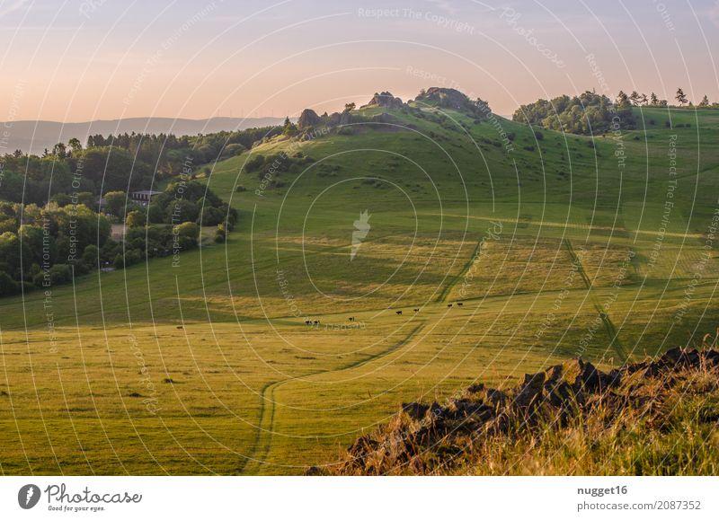 auf dem Dörnberg in Nordhessen Ferien & Urlaub & Reisen Tourismus Ferne Sommer Sommerurlaub Sonne Berge u. Gebirge wandern Umwelt Natur Landschaft Pflanze