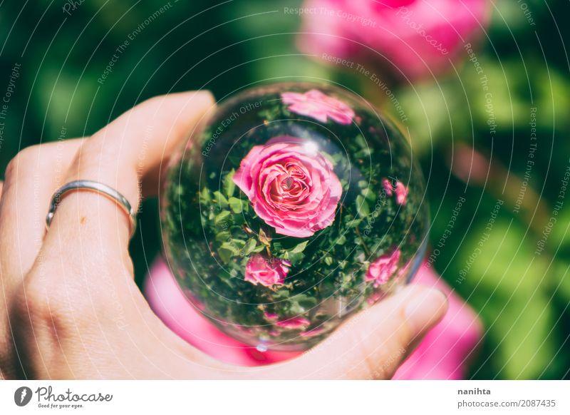 Rosa Rosen Blick durch eine Kristallkugel Natur Pflanze Farbe schön grün Hand Umwelt Leben Kunst außergewöhnlich rosa Design hell Glas Kreativität authentisch