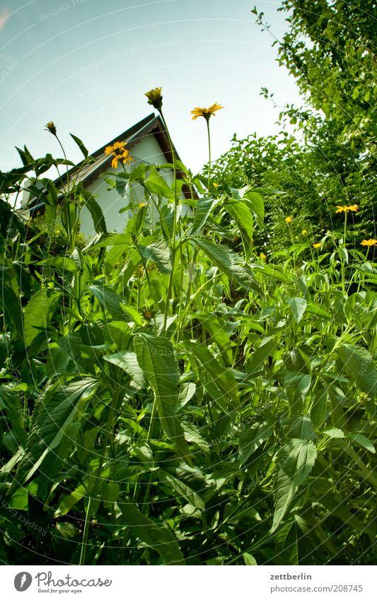 Was ist eigentlich bei den Nachbarn los? Umwelt Natur Pflanze Garten Juni Blume Haus Dachgiebel Gartenhaus Stauden Schrebergarten Kleingartenkolonie grün