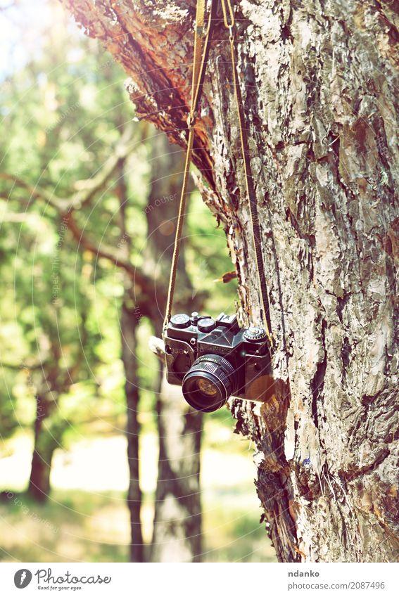 Alte Retro- Filmkamera, die an einem Baum hängt Sonne Fotokamera Natur Gras Park Wald alt retro grün Filmmaterial Gerät erhängen Kofferraum Frühling