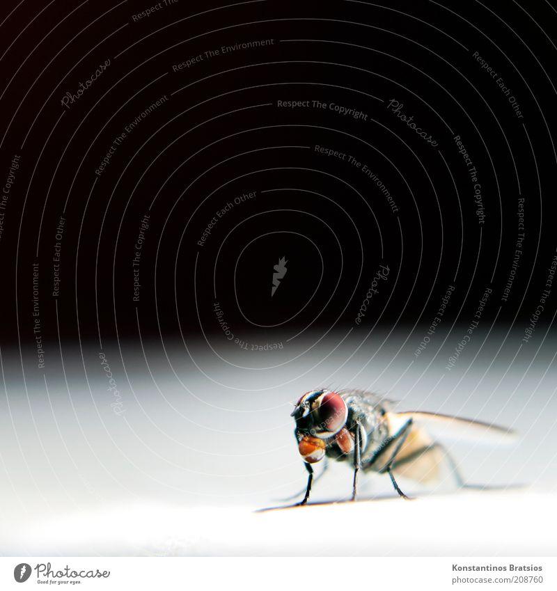 Bubba Hubba Ernährung Tier klein Fliege sitzen Tropfen Insekt unten Flüssigkeit skurril Fressen