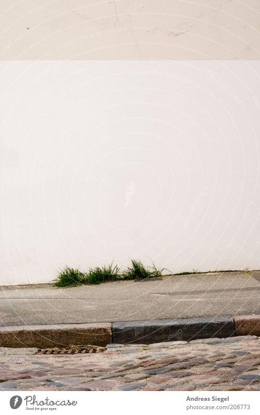 Lübeck alt weiß Stadt Pflanze Straße Wand Gras Stein Mauer Wege & Pfade Kraft Fassade frisch Sauberkeit Mut Kopfsteinpflaster