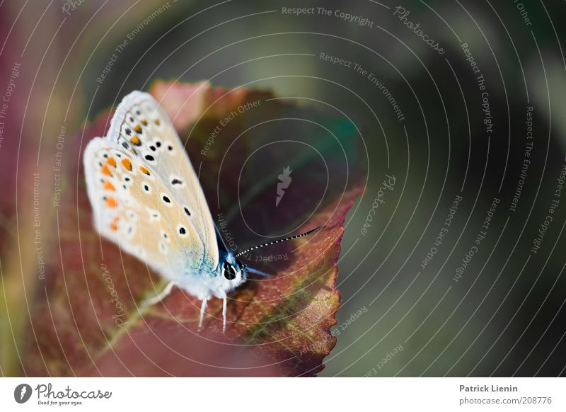 bitte nicht bewegen Natur schön Pflanze Sommer Blatt Tier Wiese Landschaft warten lustig Umwelt sitzen Tiergesicht Flügel Punkt Schmetterling