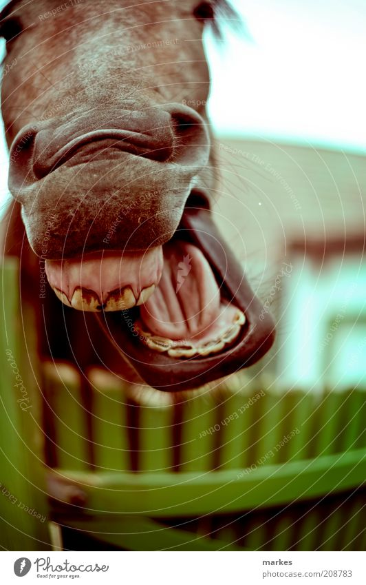 Freude Tier Gefühle Glück lachen lustig Pferd Fröhlichkeit Tiergesicht grinsen genießen Nutztier mehrfarbig Fischauge