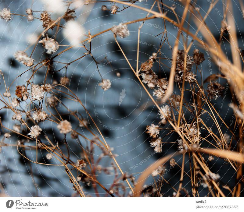 Verdorrt Pflanze Gras Sträucher Blatt Blüte Halm Stengel dehydrieren alt trocken Dekoration & Verzierung Farbfoto Innenaufnahme Nahaufnahme Detailaufnahme