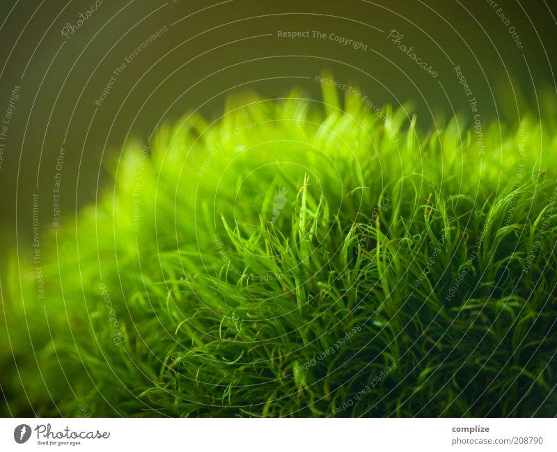 nix los Umwelt Natur Pflanze Wasser Grünpflanze exotisch genießen Wärme weich grün Umweltschutz Moos Moosteppich Farbfoto Makroaufnahme Strukturen & Formen