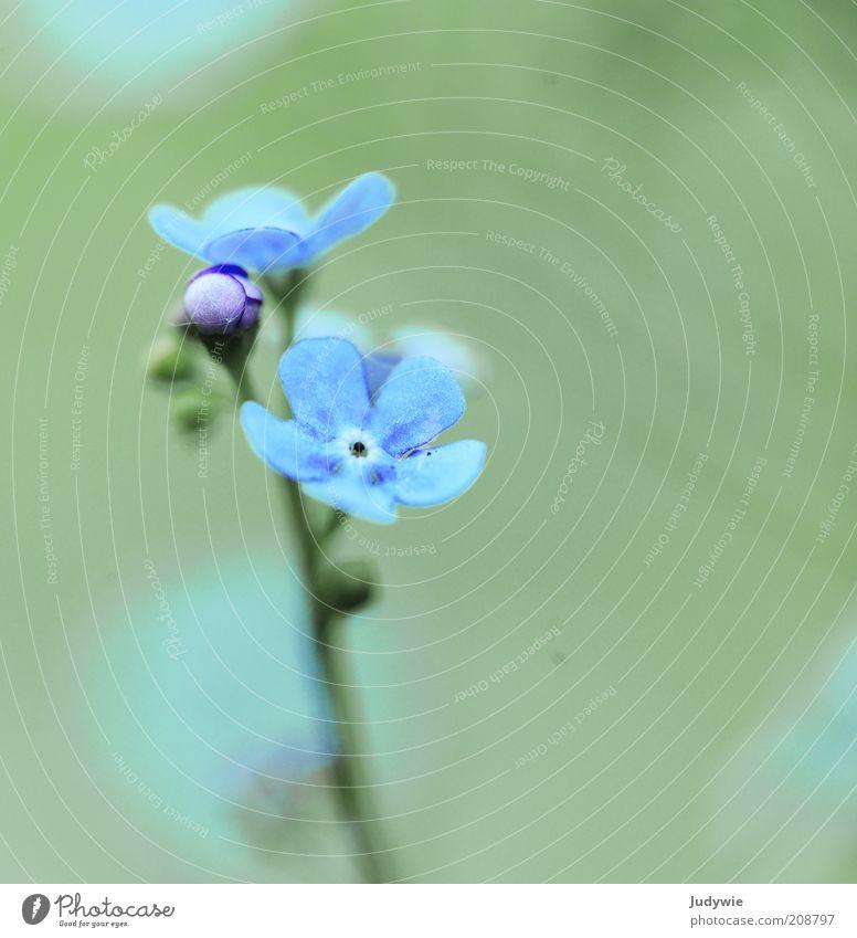 Fleur fragile Natur schön Blume grün blau Pflanze Sommer Gefühle Frühling träumen Park klein Umwelt ästhetisch Wachstum dünn