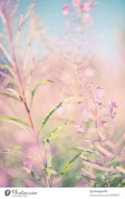 Purple 4 Natur Sonne Blume Pflanze Sommer Wald Wiese Blüte Glück Park Lebensfreude Schönes Wetter Geborgenheit Himmel Grünpflanze Gärtner