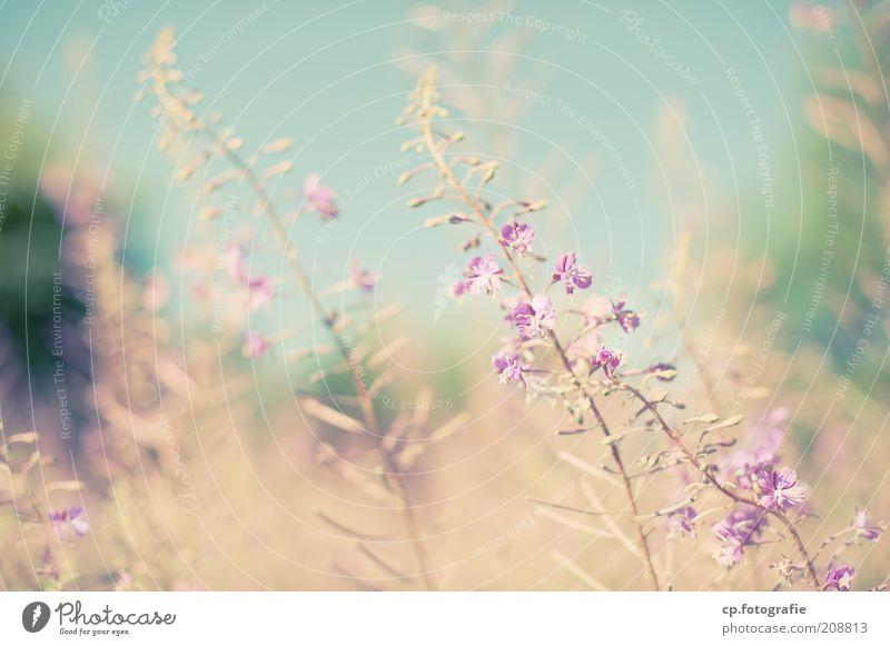 Purple 5 Natur Sonne Blume Pflanze Sommer Blüte Gras Glück Zufriedenheit Lebensfreude Schönes Wetter Geborgenheit Freude Vorfreude Grünpflanze Gärtner
