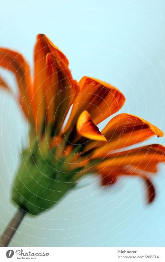 Natur grün schön rot Pflanze Sommer Blume Farbe gelb Blüte hell Hintergrundbild natürlich Wachstum Streifen Schönes Wetter