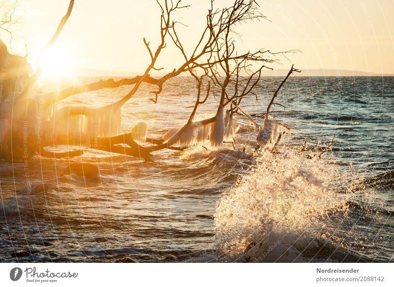Winter an der Ostsee Natur Ferien & Urlaub & Reisen Wasser Sonne Landschaft Baum Meer Strand kalt Küste Eis Wellen frisch Wind Schönes Wetter