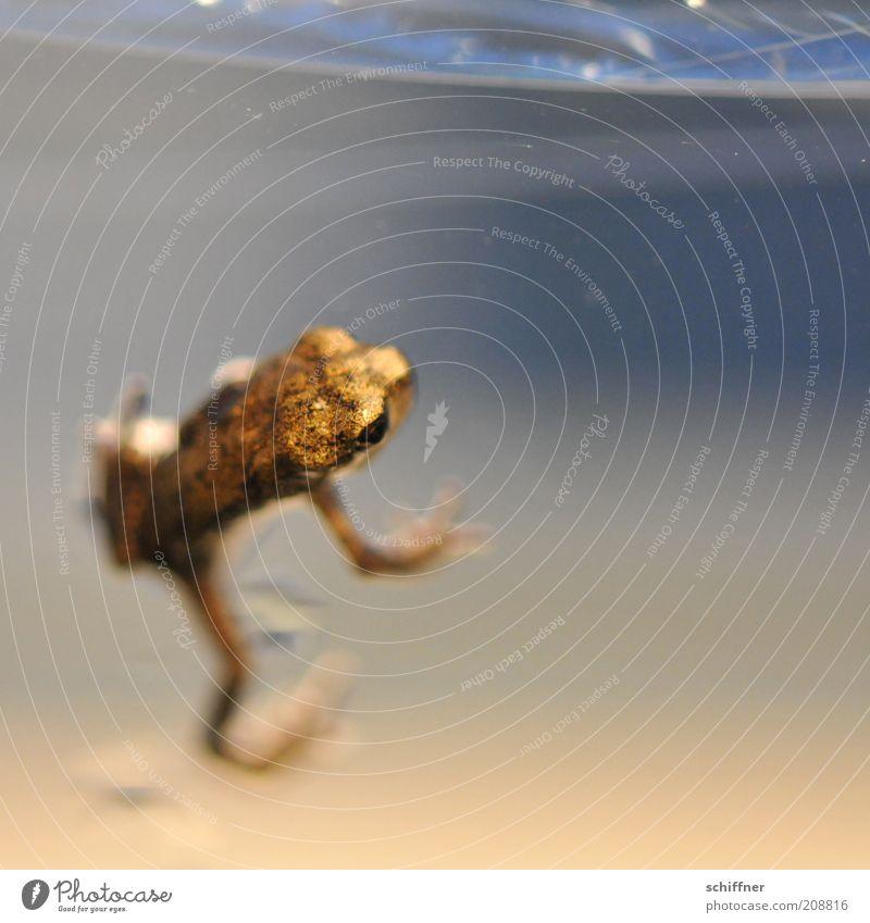 Jörg Tier Frosch 1 Tierjunges klein gold Klettern festhalten schimmern winzig Nahaufnahme Makroaufnahme Tierporträt Farbfoto Menschenleer auftauchen