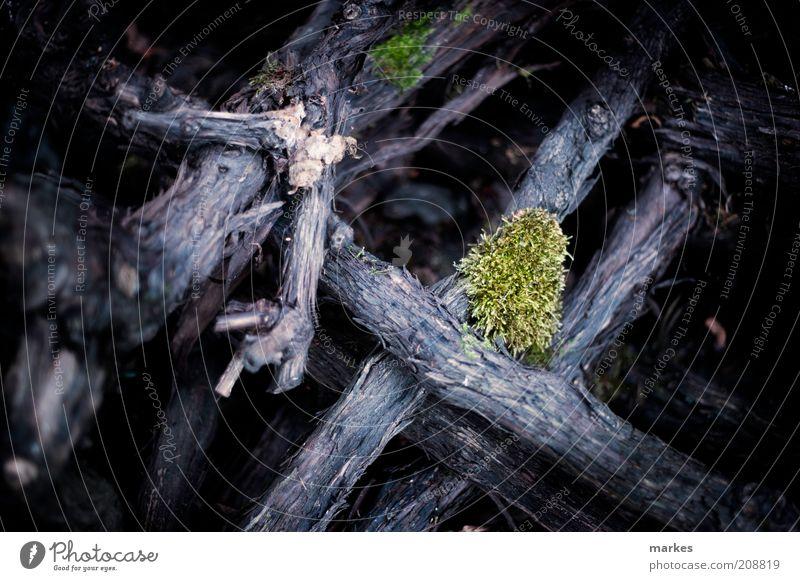 unterholz Natur Pflanze Baum Moos blau grün Stimmung Umwelt Farbfoto Außenaufnahme Detailaufnahme Menschenleer Tag Schwache Tiefenschärfe Zentralperspektive
