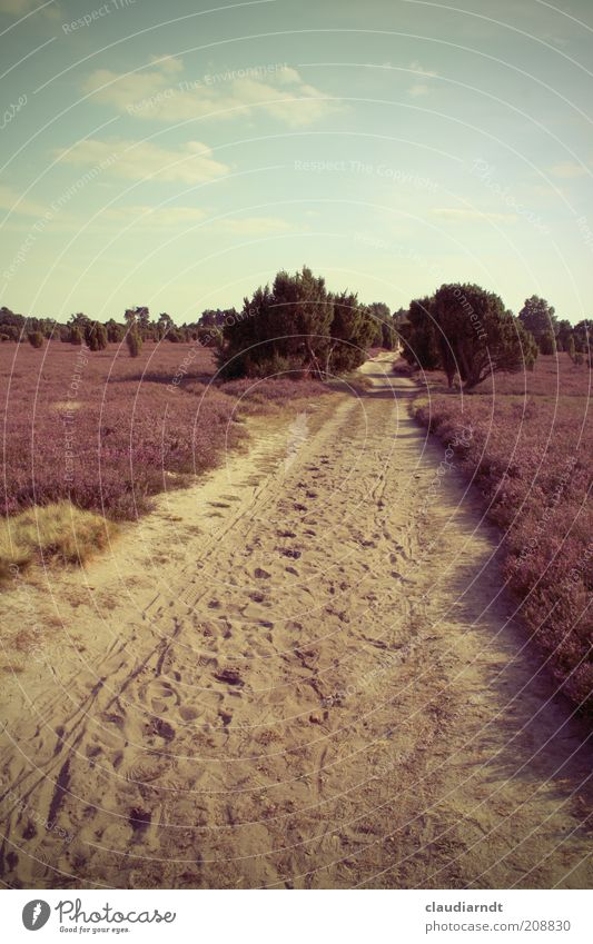 Heide Natur Landschaft Pflanze Sand Himmel Sommer Schönes Wetter Blume Sträucher Blüte Heidekrautgewächse Kulturlandschaft trocken violett Wege & Pfade Sandweg