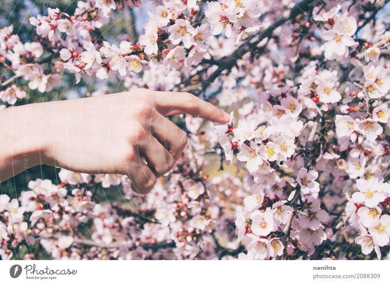 Die Hand des Mannes, die Mandel berührt, blüht Mensch Natur Jugendliche schön Junger Mann Baum Blume 18-30 Jahre Erwachsene Umwelt Leben Lifestyle Frühling