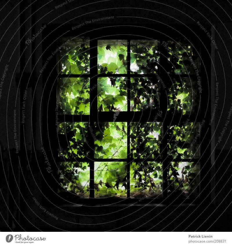 zugewachsen alt grün ruhig dunkel Wand Fenster Mauer Gebäude Angst Architektur verrückt Fabrik wild gruselig verfallen entdecken