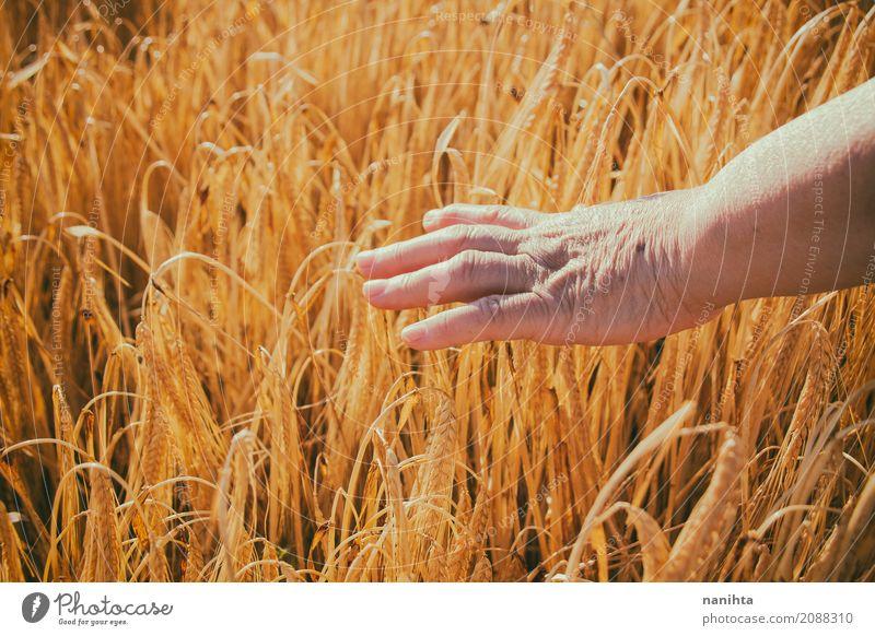 Rührender Weizen der alten Frau Hand Getreide Ernährung Vegetarische Ernährung Lifestyle Gesundheit Seniorenpflege Leben Erholung ruhig Landwirtschaft