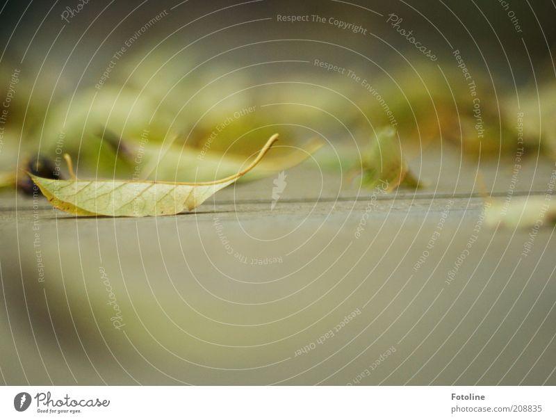 Trockenheit oder Herbst? Umwelt Natur Pflanze Erde Blatt hell natürlich grün trocken gefallen Farbfoto mehrfarbig Außenaufnahme Textfreiraum unten Tag