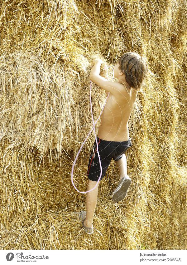 Wenn wir erklimmen... Leben Sommer Kind Junge 1 Mensch 8-13 Jahre Kindheit Nutzpflanze Bewegung Fitness frei Freude Lebensfreude Optimismus Neugier Abenteuer