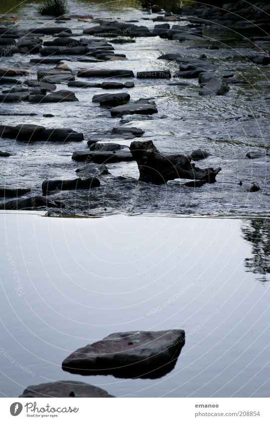 dreisam schwellen Umwelt Natur Wasser Klima Wetter Baum Flussufer See Bach nass Freiburg im Breisgau Stein fließen Baumstamm Gewässer Wellen stürzend