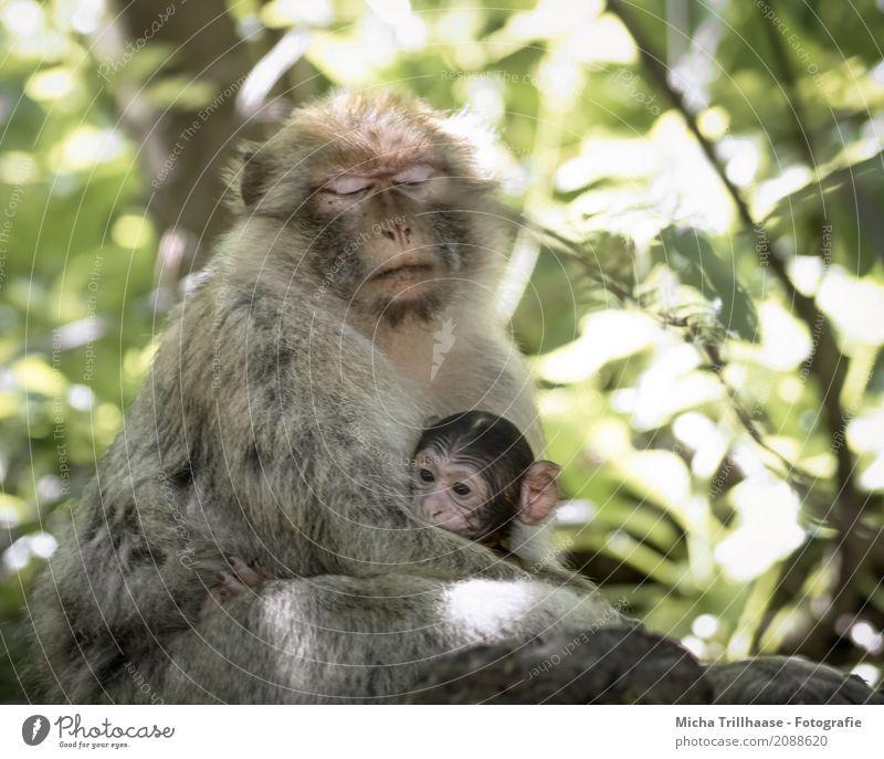 Nähe und Geborgenheit Natur Pflanze Sonne Baum Erholung Blatt Tier Tierjunges Auge Wildtier genießen Schönes Wetter berühren schlafen Schutz Sicherheit