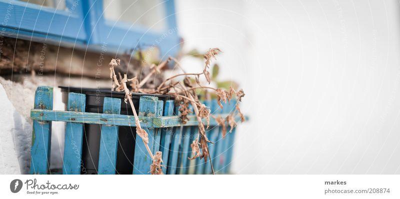 nicht in griechenland...... Pflanze Blüte Topfpflanze Blühend alt natürlich blau weiß Stimmung Wahrheit Ferien & Urlaub & Reisen verdorrt Haus Fenster Wand