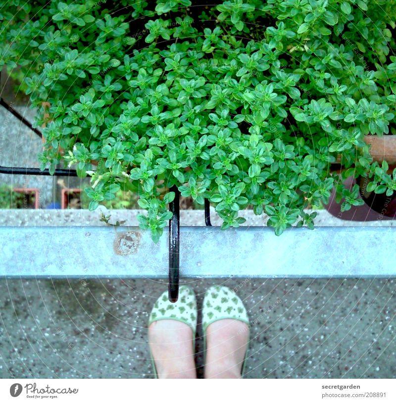 die unschuld vom lande. Frau Mensch grün Pflanze Sommer Erwachsene feminin Fuß Freizeit & Hobby Perspektive Häusliches Leben retro Balkon Beruf Am Rand
