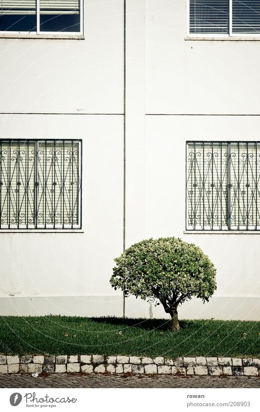 strauch Natur Baum grün Stadt Pflanze Haus Straße Wiese Garten Gebäude Fassade Sträucher Bürgersteig Bauwerk Stadtzentrum Gitter